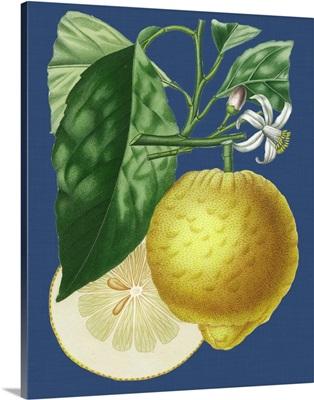 French Lemon on Navy I