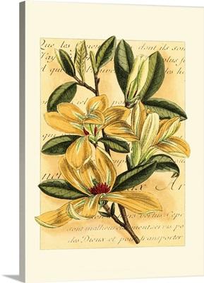French Magnolia