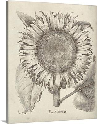 Fresco Sunflower I