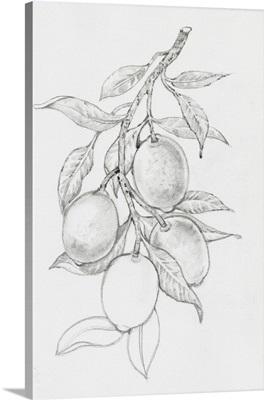 Fruit-Bearing Branch I