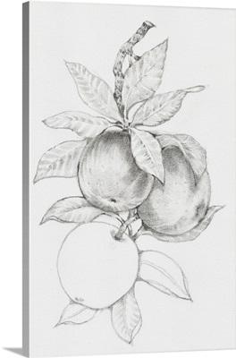 Fruit-Bearing Branch II