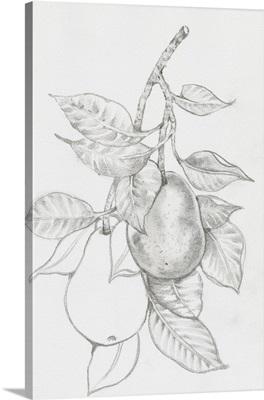 Fruit-Bearing Branch III