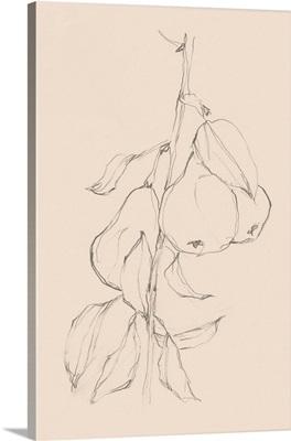 Fruit Contour Study II