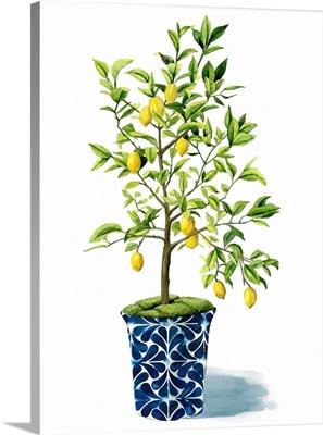 Fruit Tree II