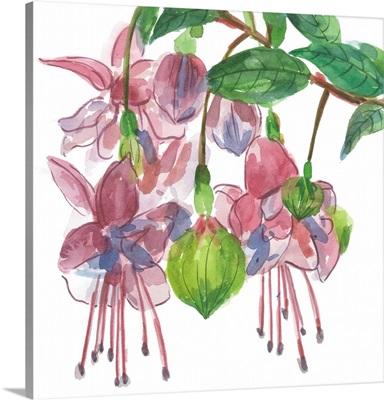 Fuchsias I