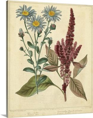 Garden Flora I