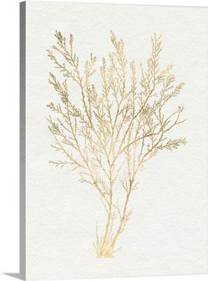 Gilded Algae I