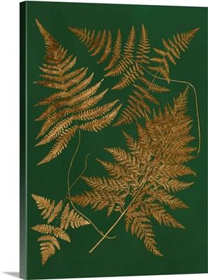 Gilded Ferns II