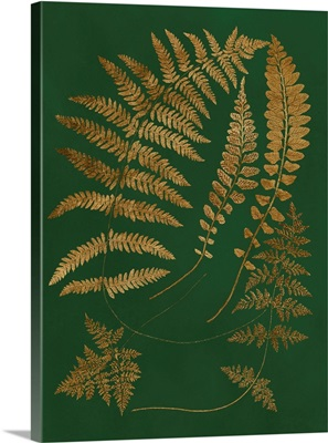 Gilded Ferns III