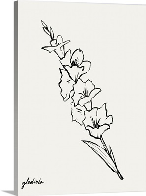 Gladiola Sketch I