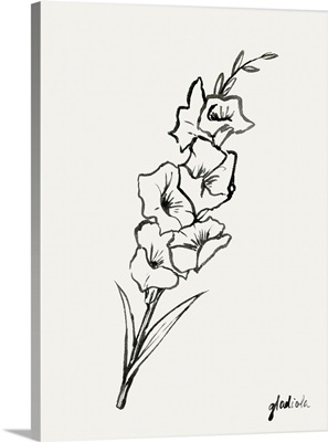 Gladiola Sketch II