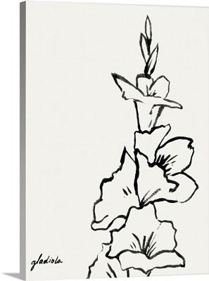 Gladiola Sketch IV