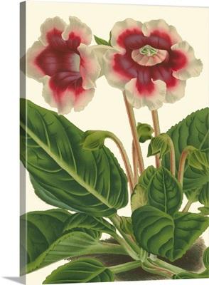 Gloxinia Garden III