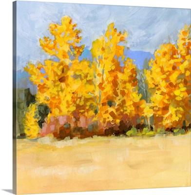 Golden Aspen Trees I