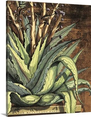 Graphic Aloe I