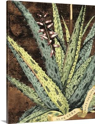 Graphic Aloe IV