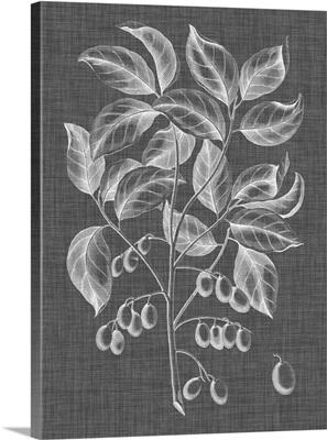 Graphic Foliage V