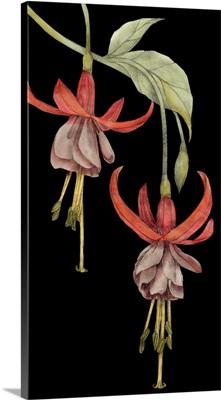 Graphic Fuchsia VI