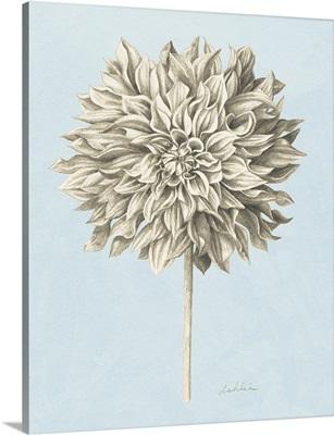 Graphite Botanical Study III