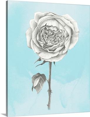 Graphite Rose I
