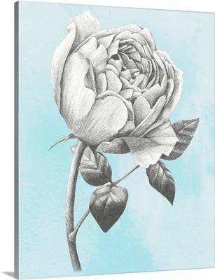 Graphite Rose II