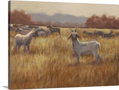 Grazing Goats I