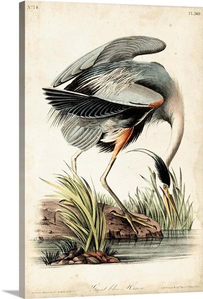 Great Blue Heron Wall Art Canvas Prints Framed Prints Wall Peels Great Big Canvas
