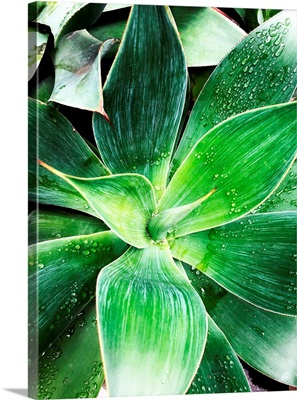 Green Tropical Succulent IV