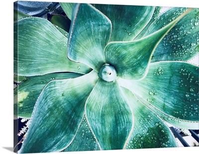 Green Tropical Succulent VII