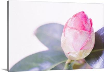 Halogen Bloom I