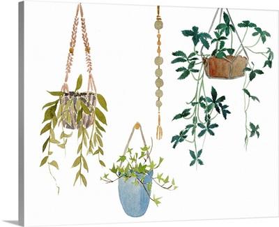 Hanging Greens I