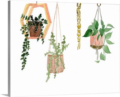 Hanging Greens III