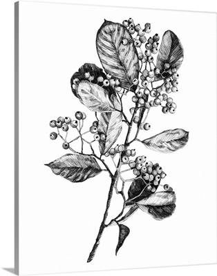 Hawthorn Berry Branch I