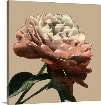 Heirloom Rose I