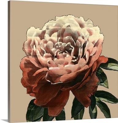 Heirloom Rose II