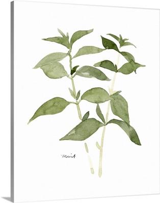 Herb Garden Sketches I