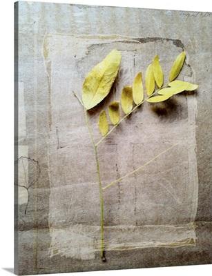Herbarium V