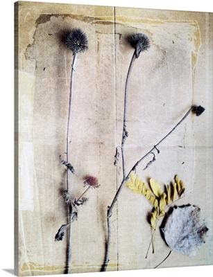 Herbarium VII