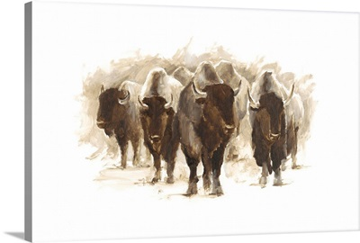 Herd of Bison II