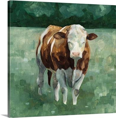 Hereford Cattle II