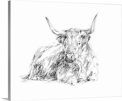 Highland Cattle Sketch I