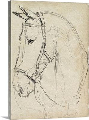 Horse In Bridle Sketch II