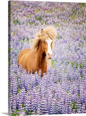 Horse In Lavender I