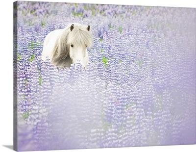 Horse In Lavender II