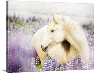 Horse In Lavender III