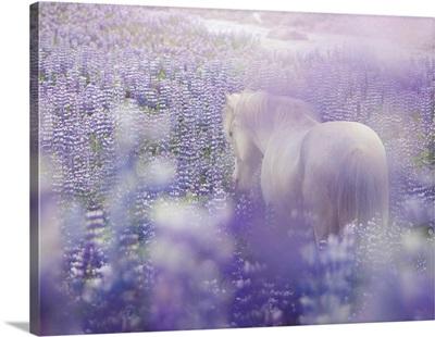 Horse In Lavender IV