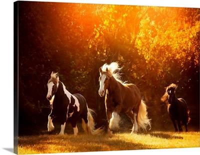 Horse Motion V
