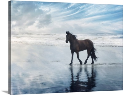 Horse Motion VI