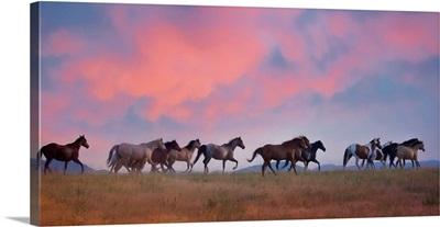 Horse Run VIII