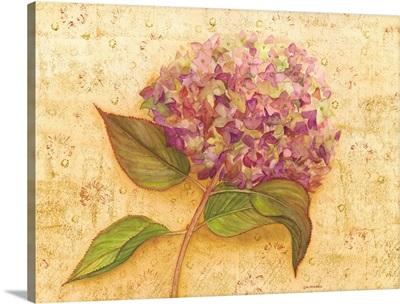 Hydrangea Love I